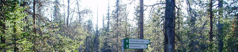 Swedish trees and sign