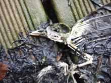 Fallen in flight - bird skeleton on the studio balcony at Wooda Farm